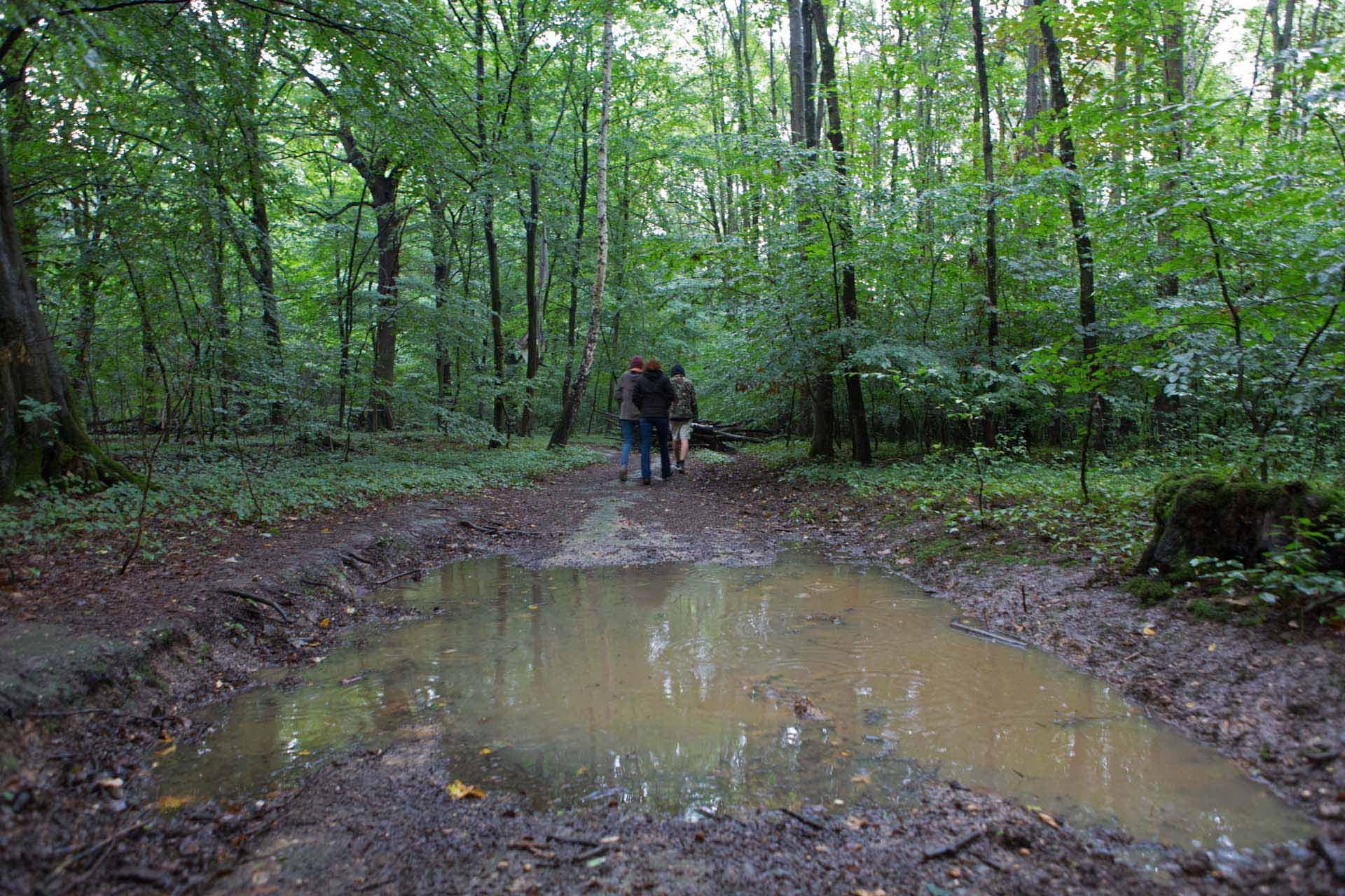 Der unweit von Garzweiler liegende Tagebau 'Hambach' der RWE bedroht den Rest des ursprünglich 12000 Hektar großen Waldgebiets 'Hambacher Forst', der bereits weitgehend dem Braunkohleabbau weichen musste. Momentan ist die Rodung des kleinen Rest Waldes gerichtlich gestoppt