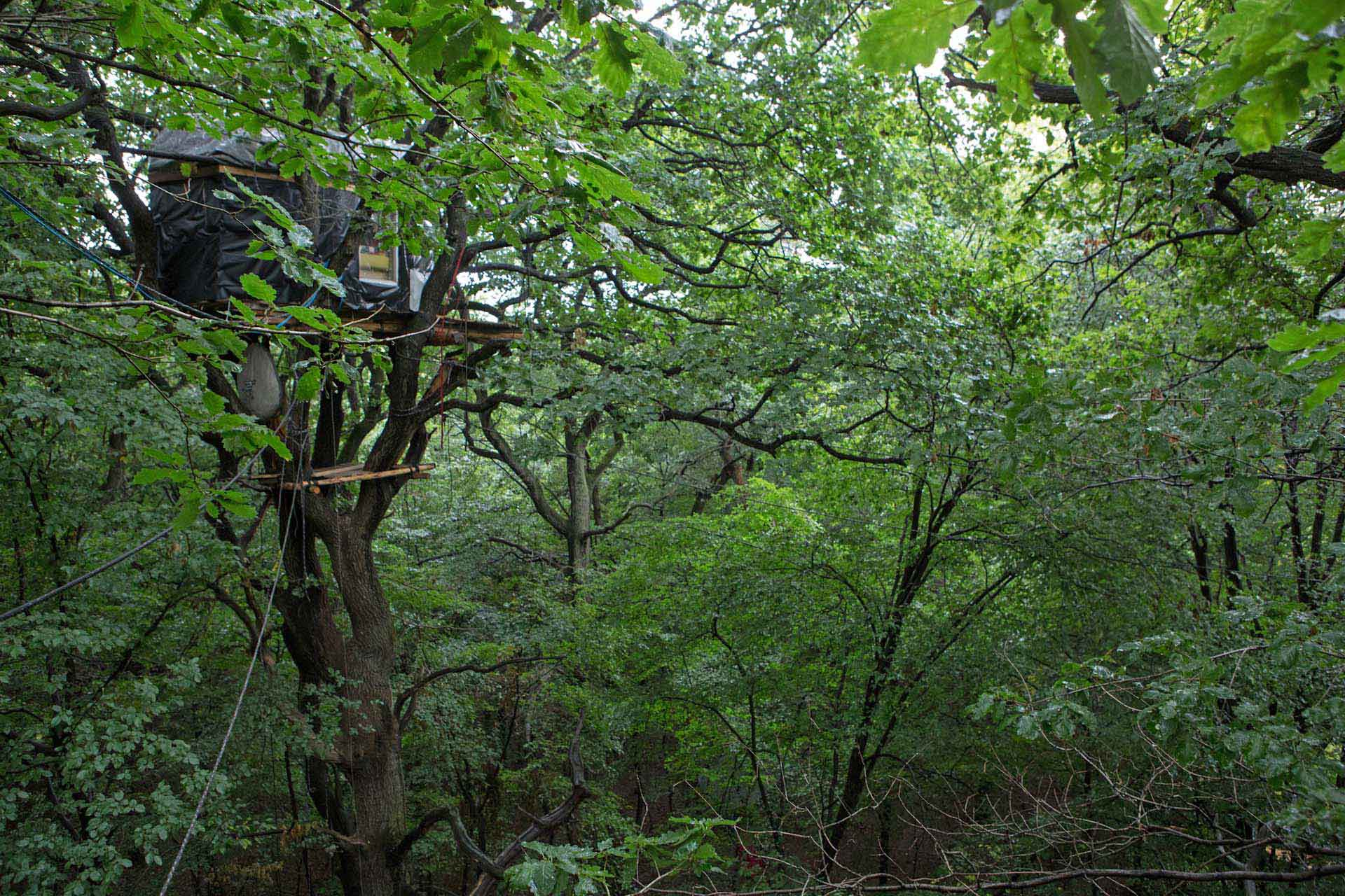 Von Baumschützern bewohnte Häuser auf  hohen, teils bis zu dreihundert Jahre alten Eichen