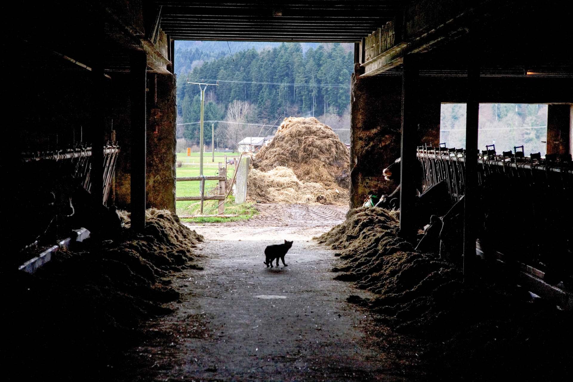 Auf dem Bauernhof der Familie Nopper in Gutach-Bleibach, im Schwarzwald