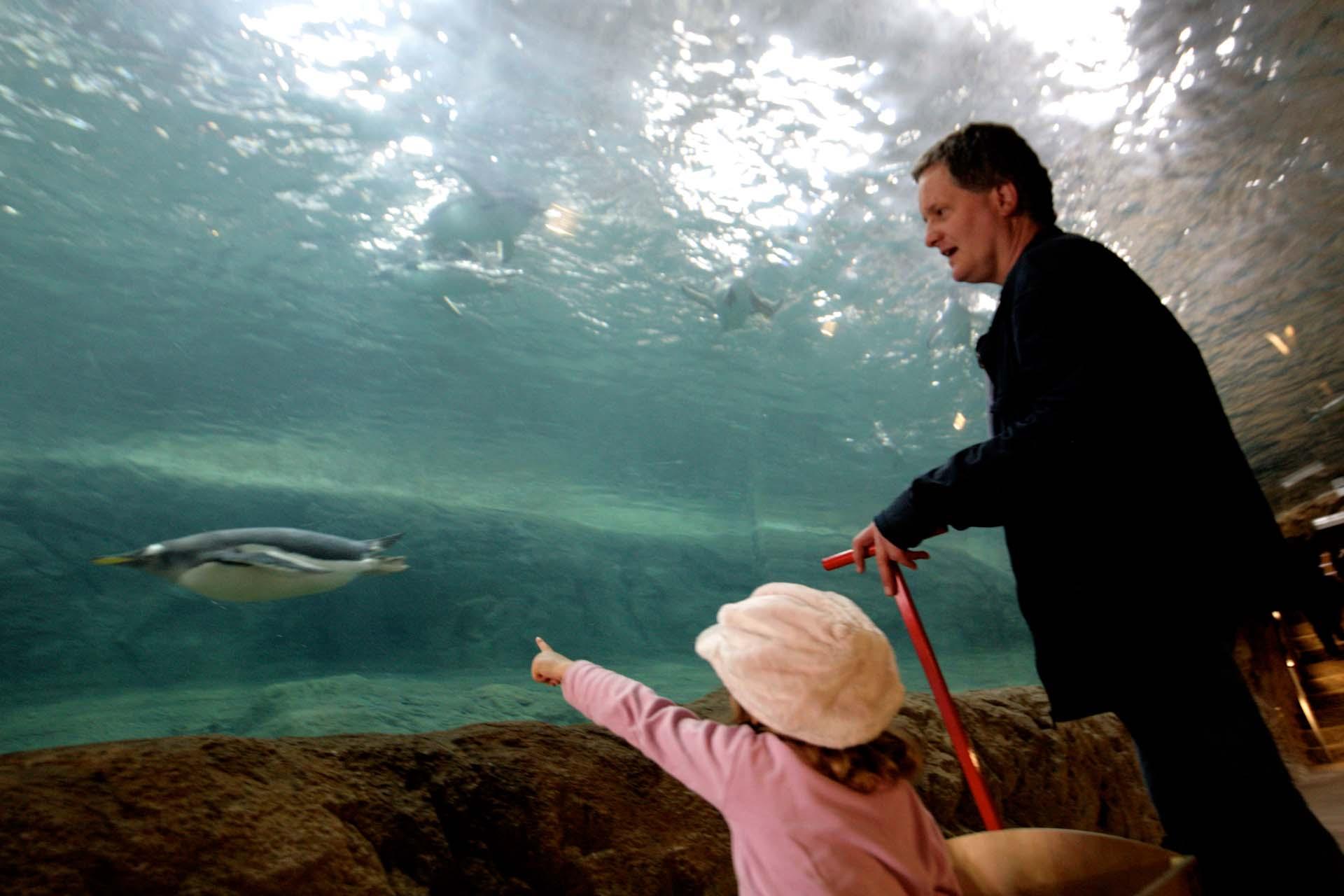 Die neue, weltweit einmalige Pinguinanlage im Zoo