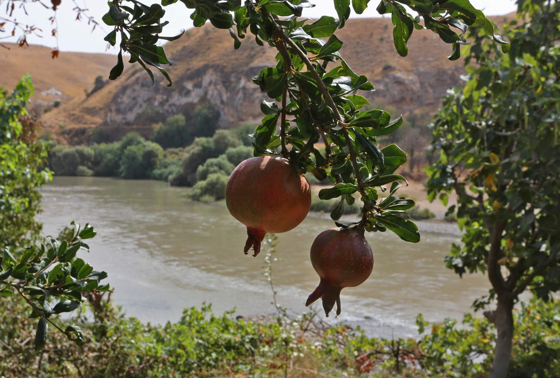 Eine blühende Gartenoase mit Granatäpfeln direkt am Tigris.
