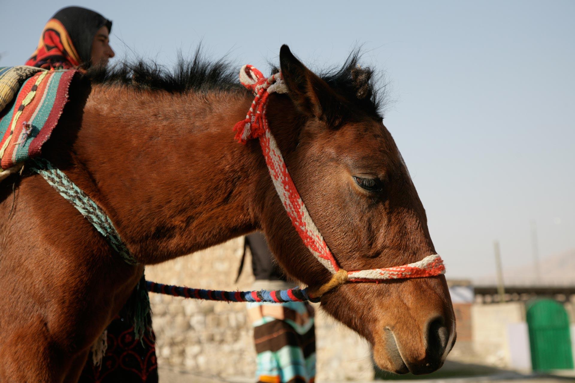 Nomaden und ihre Tiere machen häufig Rast in Hasankeyf.