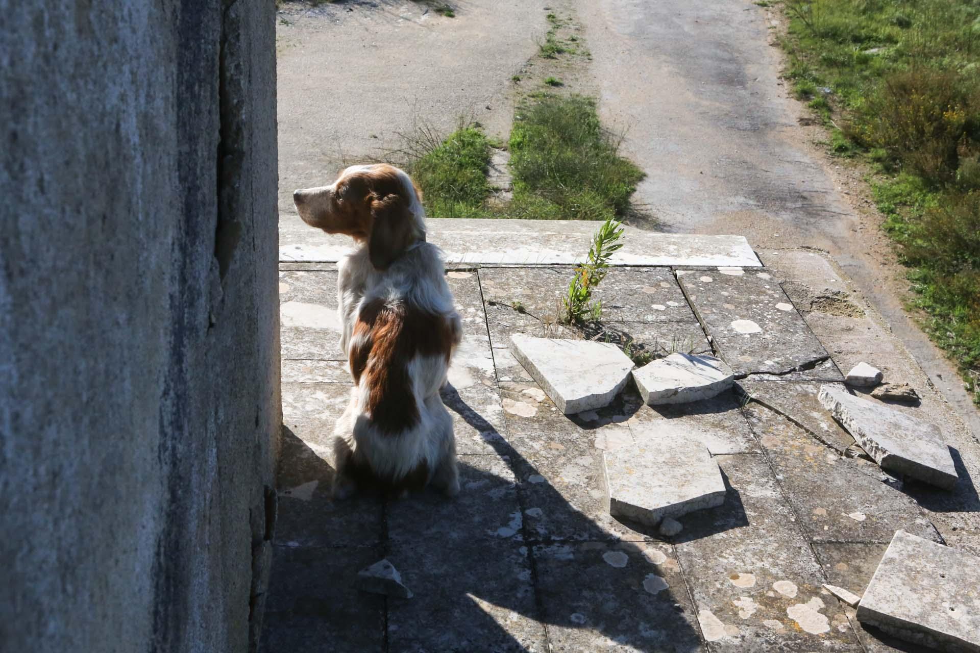 Das Haus ist auch Zuhause dieses halb verhungerten Hundes, der wenig Überlebenschance hat. In der Gegend werden die Tiere häufig einfach ausgesetzt und ihrem Schicksal überlassen.