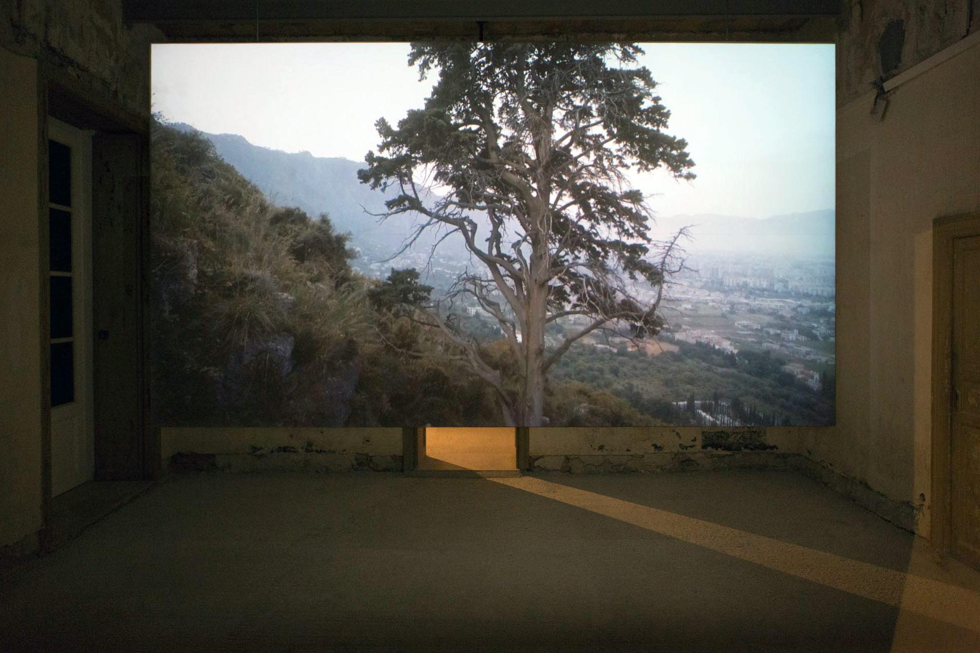 Uriel Orlow, Wishing Trees, 2018, Palazzo Butera, Garden of Flows, Manifesta 12, Palermo
